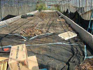 1年目の堆肥