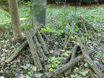 ジャンボ椎茸のほだ木