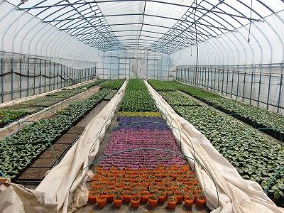 野菜苗のビニールハウス