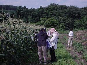 ブルーベリー収穫体験・野菜収穫体験