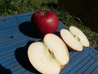 りんご千秋(せんしゅう)の切り口