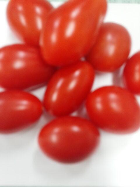 ミニトマト ロッソナポリタン